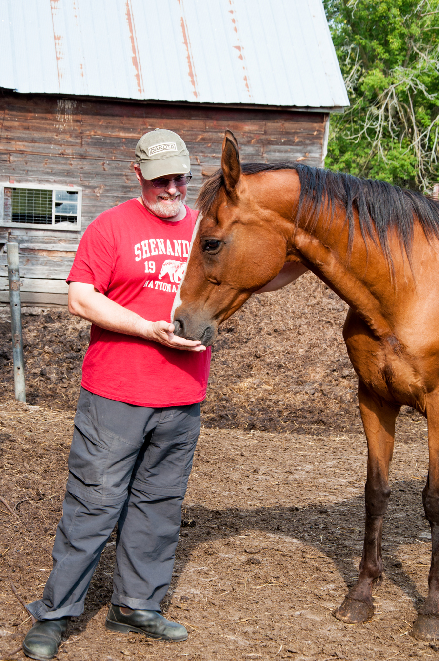 Man feeding a horse on a farm
